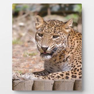 Leopard lying plaque