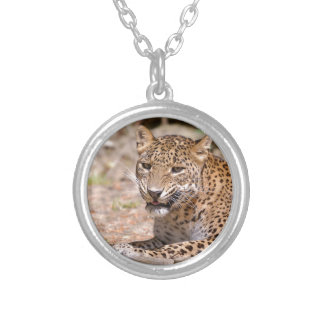 Leopard lying silver plated necklace