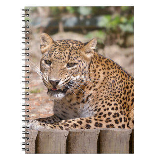 Leopard lying spiral note book