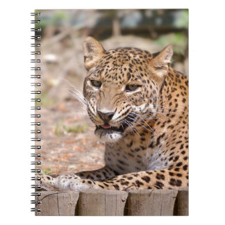 Leopard lying spiral notebooks