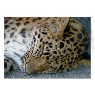 Leopard Note Card