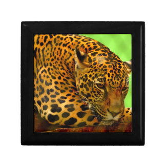 Leopard on Brown Log Gift Box