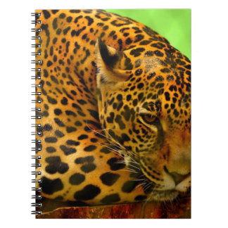 Leopard on Brown Log Notebooks