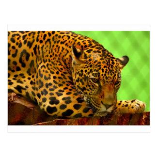 Leopard on Brown Log Postcard