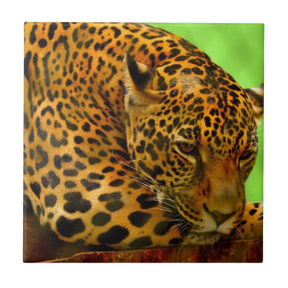 Leopard on Brown Log Tile