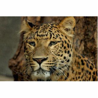 Leopard Photo Cut Out