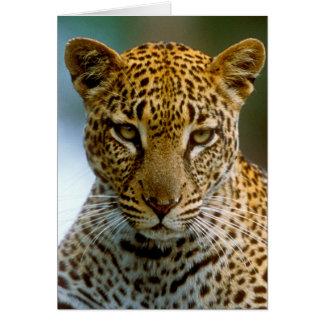 Leopard Portrait Card
