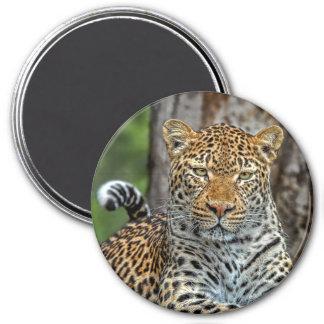 Leopard Portrait Magnet