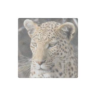 Leopard portrait stone magnets
