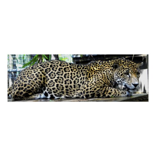 Leopard Poster 36x12 or Smaller Size Only