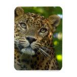 Leopard  Premium Magnet Rectangular Magnets