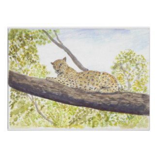 Leopard Resting in a Tree Poster