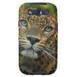 Leopard  Samsung Galaxy Case Samsung Galaxy SIII Covers