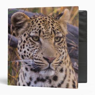Leopard sitting, Botswana, Africa 3 Ring Binders