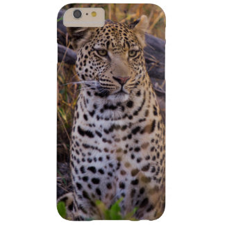 Leopard sitting, Botswana, Africa Barely There iPhone 6 Plus Case