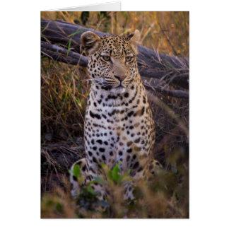 Leopard sitting, Botswana, Africa Card