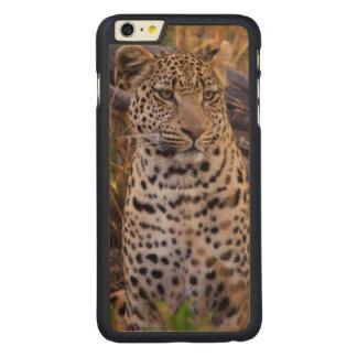Leopard sitting, Botswana, Africa Carved® Maple iPhone 6 Plus Case