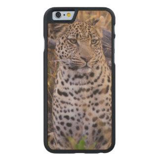 Leopard sitting, Botswana, Africa Carved® Maple iPhone 6 Slim Case