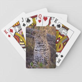 Leopard sitting, Botswana, Africa Playing Cards