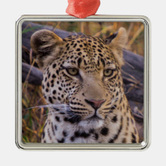 Leopard sitting, Botswana, Africa Silver-Colored Square Ornament