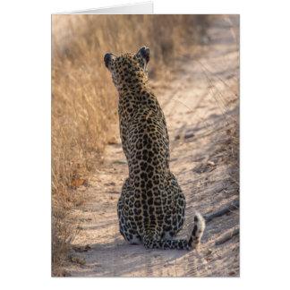 Leopard sitting in road, Africa Card
