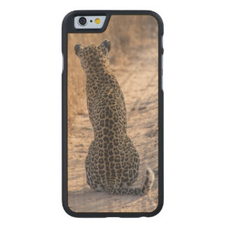 Leopard sitting in road, Africa Carved Maple iPhone 6 Case