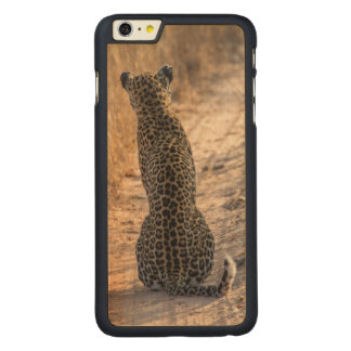 Leopard sitting in road, Africa Carved Maple iPhone 6 Plus Case