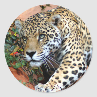 Leopard Stalking Macro Classic Round Sticker