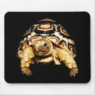Leopard Tortoise Mousepad