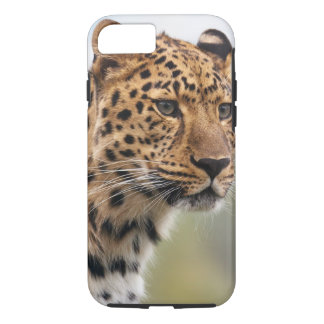 Leopard Wild Cats iPhone 7 Case