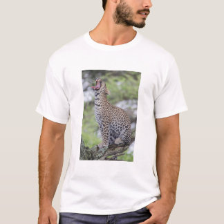 Leopard yawning, South Africa T-Shirt