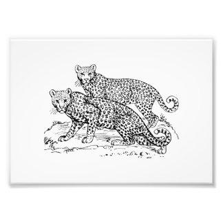 Leopards Photograph