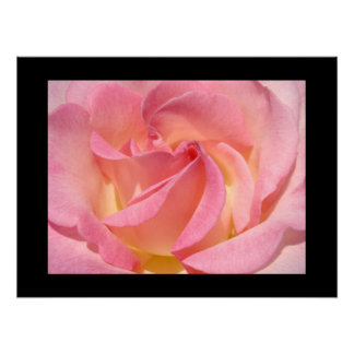 Les beaux-arts impriment des fleurs de rose de ros posters