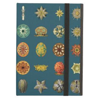 Les bijoux sous-marins d Ernst Haeckel