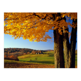 Les Etats-Unis, Vermont. Ferme Woodstock du sud Cartes Postales