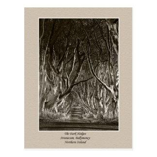 Les haies foncées, Stranocum, carte postale de Ni