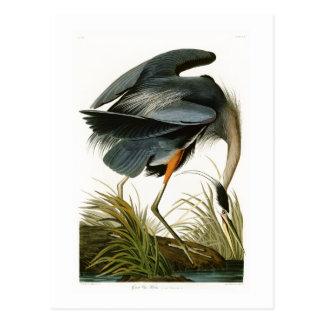 Les oiseaux de John Audubon de héron de grand bleu Cartes Postales
