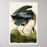 Les oiseaux de John Audubon de héron de grand bleu Poster