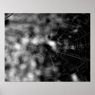 Les toiles d'araignée font des formes irrésistible poster
