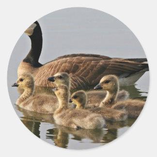 Lesser Canada Goose Brood Classic Round Sticker