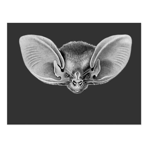 Lesser Long-eared Bat Post Cards