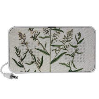 """L'estragon, plaquent 116 """"d'un de fines herbes cur haut-parleur iPod"""