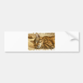 Let Sleeping Cats Lie Bumper Sticker