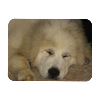 Let Sleeping Pyrs Lie Magnet