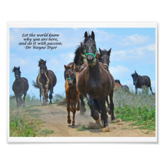 Let the World Know - Friesian Horses Art Photo