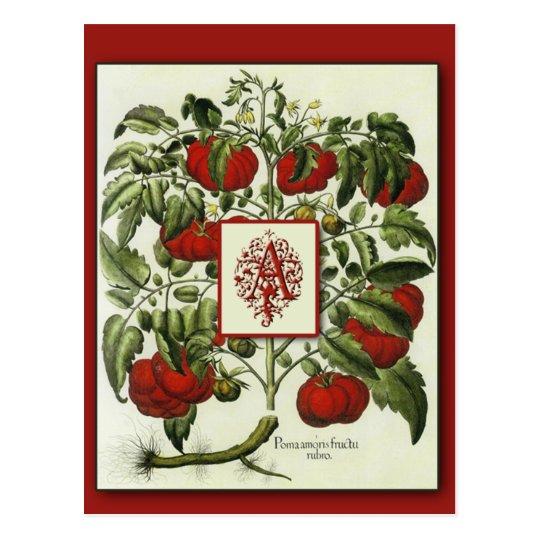 Letter A Monogram on Vintage Tomato Art Cards