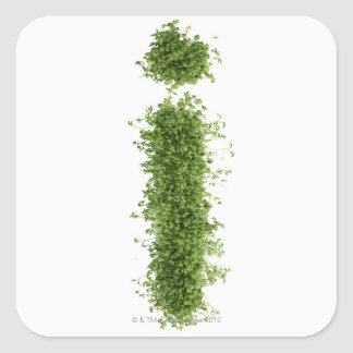 Letter 'i' in cress on white background, square sticker