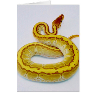 "Letter ""S"" Yellow Ball Python Card"