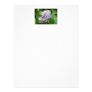 letterhead with photo of beautiful purple lilacs