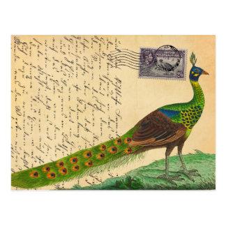 Lettre vintage de paon avec le timbre et le cachet cartes postales
